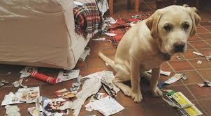 cachorro destruindo cartas
